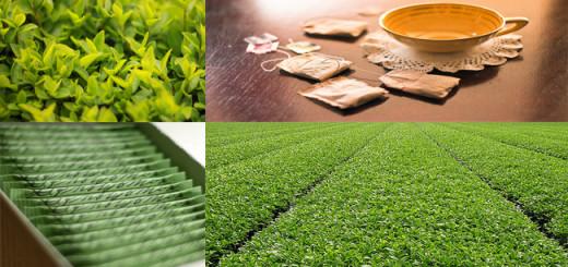 té verde salud